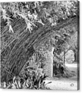 Bamboo Black White Rip Van Winkle Gardens  Acrylic Print