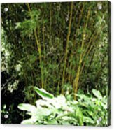 F8 Bamboo Acrylic Print