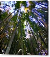 Bamboo Dreams #4 Acrylic Print