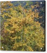 Bamboo Forest In The Fall Acrylic Print
