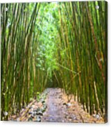 Bamboo Forest Trail Hana Maui 2 Acrylic Print