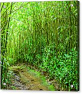 Bamboo Forest Trail Acrylic Print