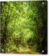 Bamboo Hike Acrylic Print
