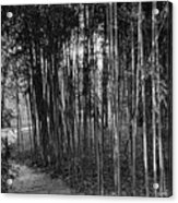 Bamboo In Black And White Acrylic Print