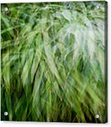 Bamboo In The Wind Acrylic Print