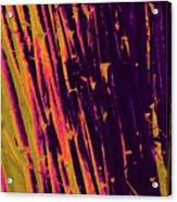 Bamboo Johns Yard 8 Acrylic Print