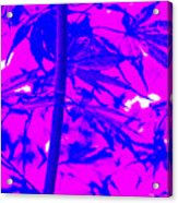 Bamboo Like Leaves Blue Acrylic Print