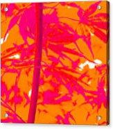 Bamboo Like Leaves Orange Acrylic Print