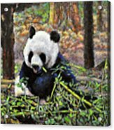 Bamboo Loving Acrylic Print