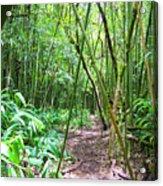 Bamboo Trail Acrylic Print