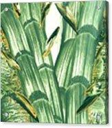 Bamboo Treasure Acrylic Print