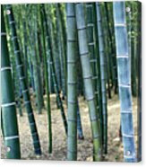 Bamboo Tree Forest, Close Up Acrylic Print