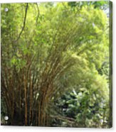 Bamboo Trees In Garden Of Eden Acrylic Print