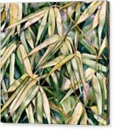 Bamboo2 Acrylic Print