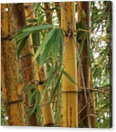 Bamboos Acrylic Print