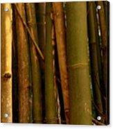 Bambusa Vulgaris Acrylic Print