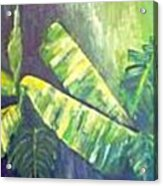 Banan Leaf Acrylic Print by Carol P Kingsley
