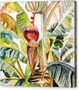 Banana Bloom Acrylic Print