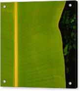 Banana Leaf Acrylic Print