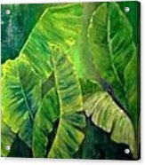 Banana Leaves Acrylic Print