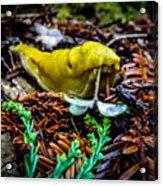 Banana Slug Acrylic Print