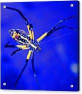 Banana Spider Acrylic Print