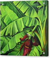 Banana Tree Flower Acrylic Print