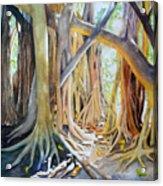 Banyan Shadow And Light Acrylic Print