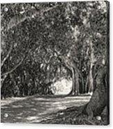 Banyan Street 3 Acrylic Print