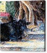 Banyan Tree Bull Acrylic Print by Claudio  Fiori