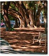 Banyans - Marie Selby Botanical Gardens Acrylic Print