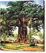 Baobab Tree - South Africa Acrylic Print