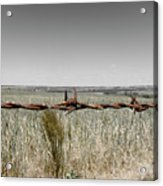 Barbed Wire Acrylic Print