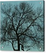 Bare Branches And Storm Clouds Acrylic Print