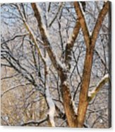 Bare Branches Acrylic Print