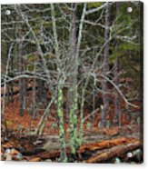 Bare Tree And Boulders In Mark Twain Forest Acrylic Print