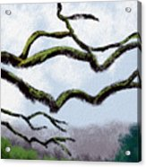 Bare Tree Branches Acrylic Print