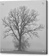 Bare Tree In Fog Acrylic Print