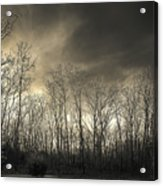 Bare Trees In A Winter Sunset Acrylic Print