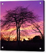 Bare Trees In Gorgeous Sunset Acrylic Print