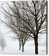 Bare Winter Trees Acrylic Print