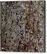 Bark Acrylic Print