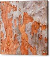 Bark Kc04 Acrylic Print