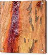 Bark Kc05 Acrylic Print