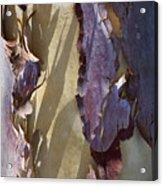 Bark Texture Acrylic Print