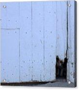 Barn Cat Hello Acrylic Print