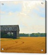 Barn In A Field  Acrylic Print