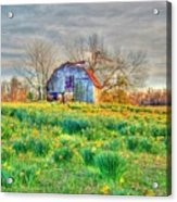 Barn In Field Of Flowers Acrylic Print by Geary Barr