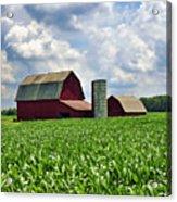 Barn In The Corn Acrylic Print