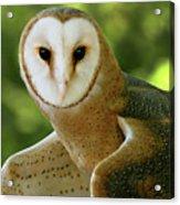 Barn Owl-6553 Acrylic Print